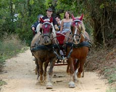 Go for a ride in a horse-drawn carriage through the vineyards and sprawling countryside